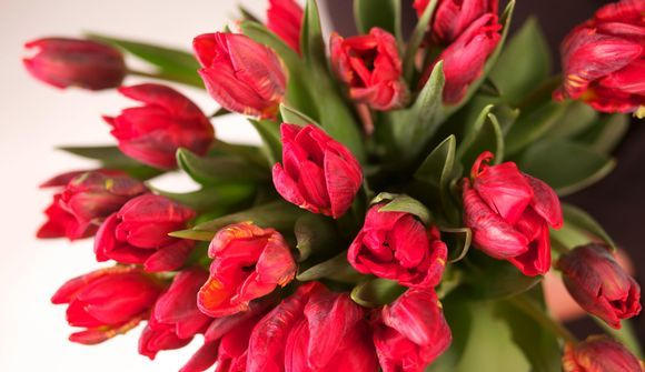 We love Tulips !