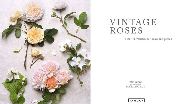 10 Best Flower Coffee Table Books