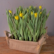 Our famous tulip crates ! d