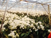 Largest orchid greenhouse in the world !!!