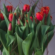 Teriffic Tulips