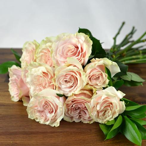 12 Soft Pink Roses2