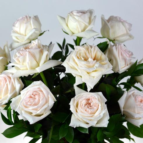 12 O'Hara Roses Arranged2