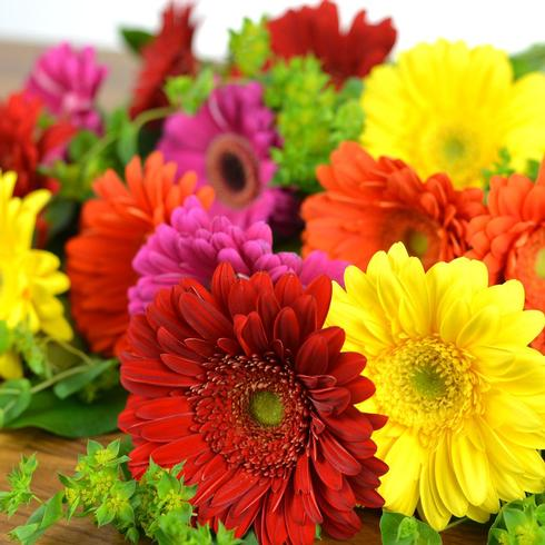 15 Gerberas with greens2