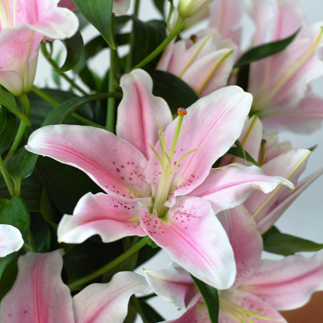 Sorbonne Lilies With Ruscus
