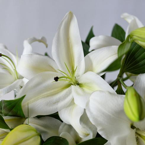White Lilies With Ruscus2