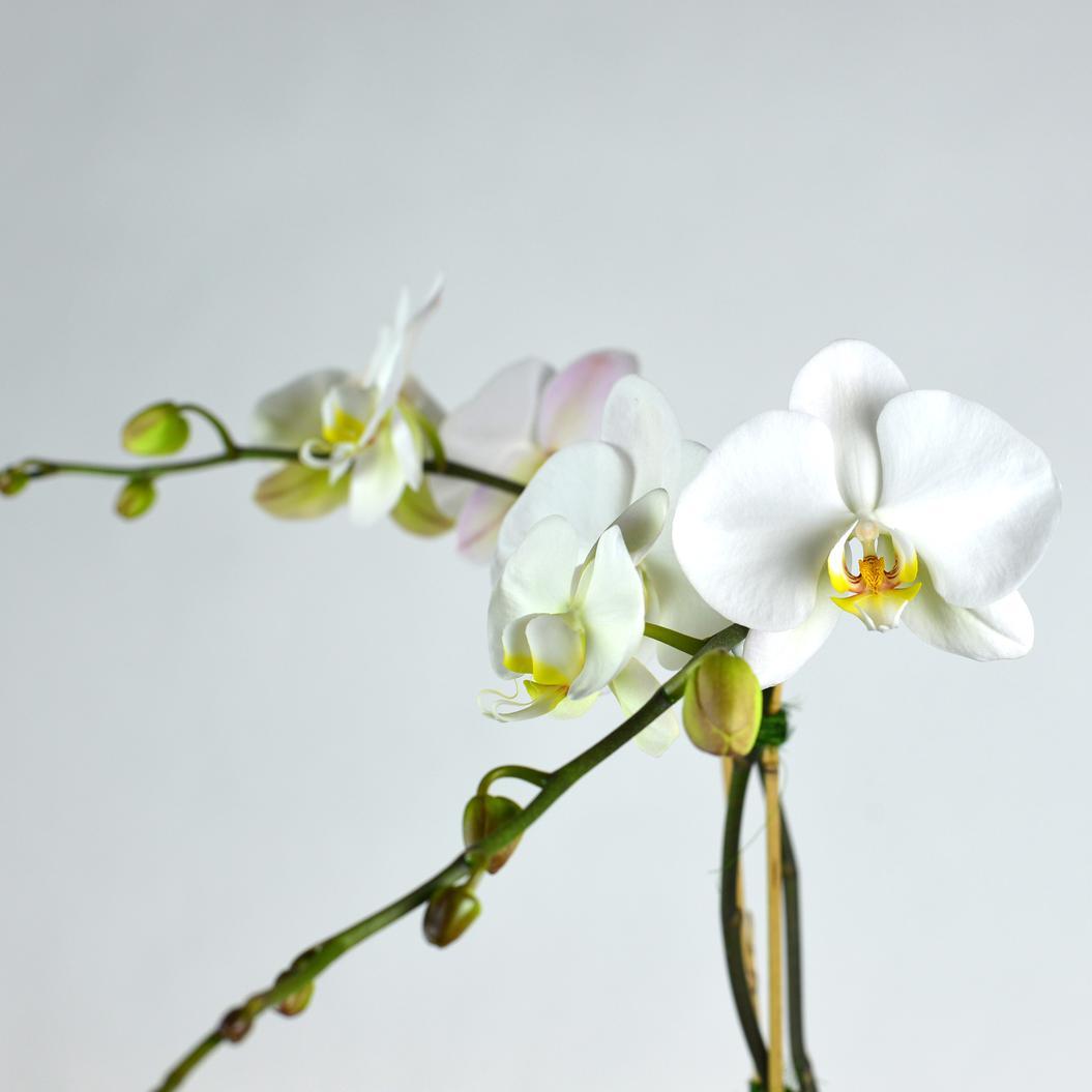 Los angeles for Fleurs et cadeaux