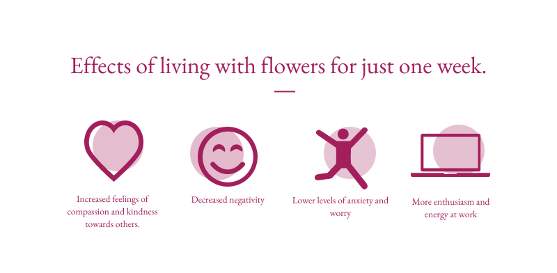 infographic on the effect of being around flowers for a week