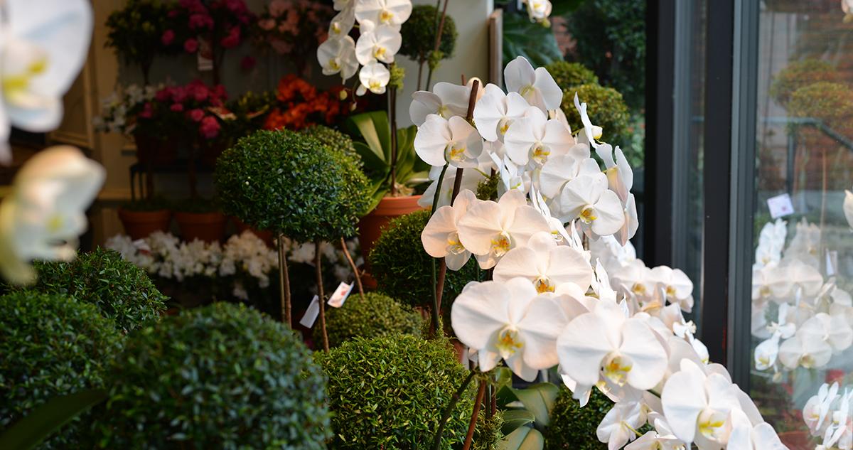 Orchids in Westmount Florist