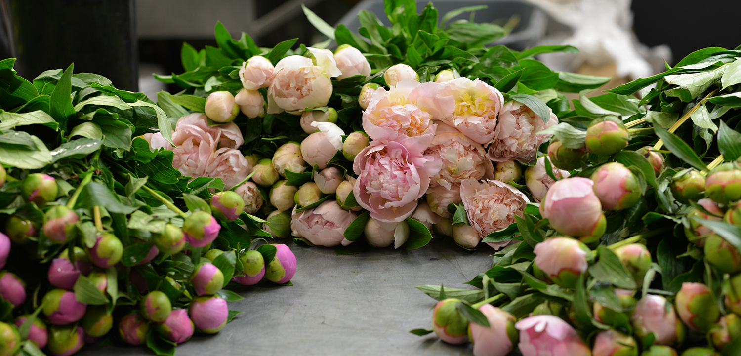 Bouquets of Peonies that you can send online